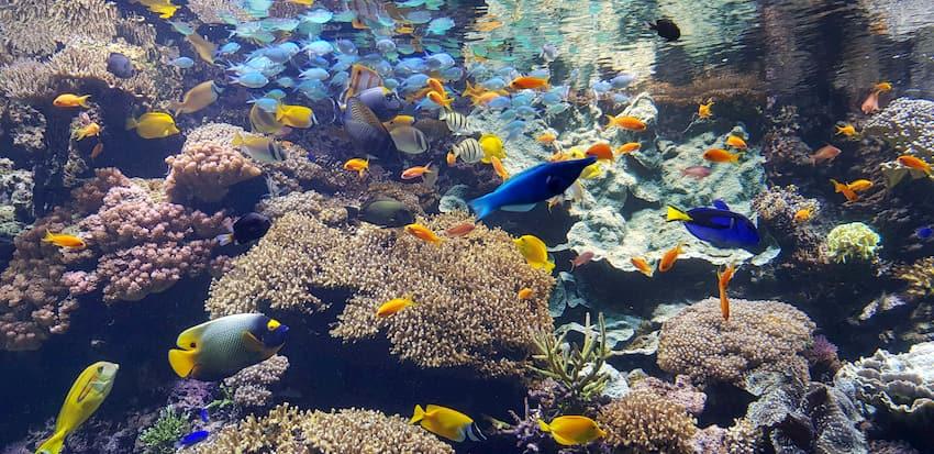 Les poissons de l'aquarium d'Océanopolis