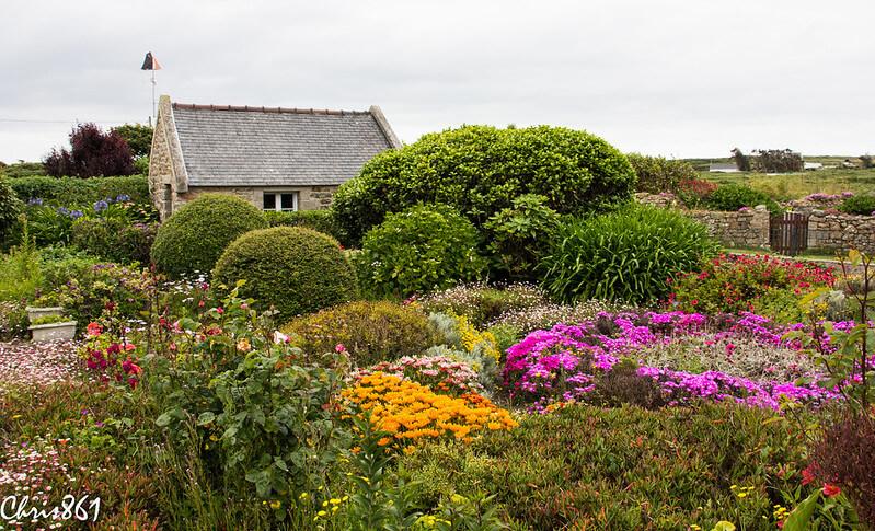 fleurs orange violettes ouessant jardin