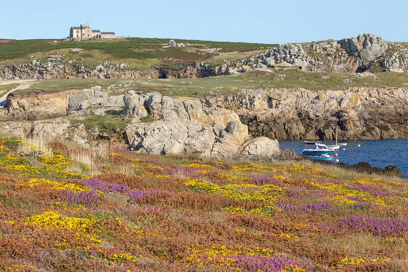 bruyère lande ajoncs jaune rochers ouessant bateau richesse flore ouessant